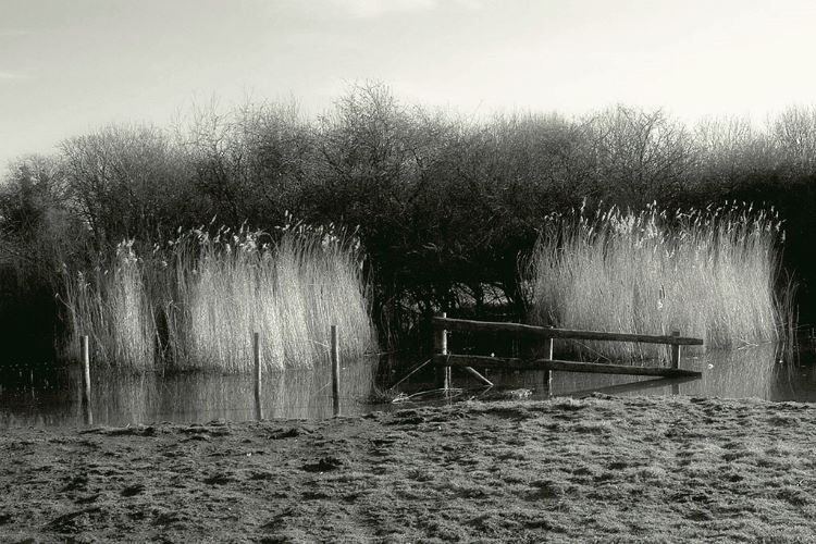 In the Reeds Infrared
