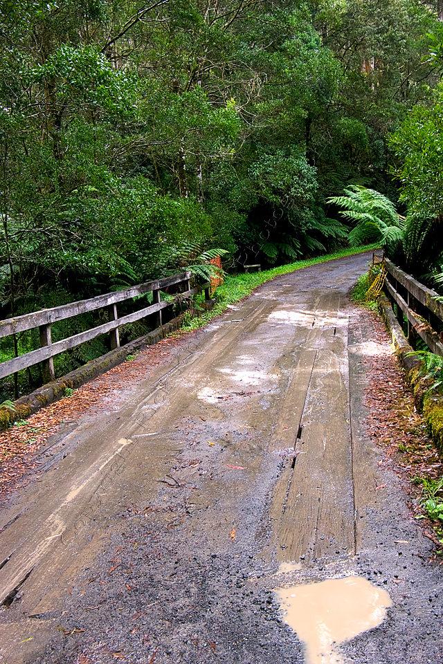 Rainforest Road, Otway National Park