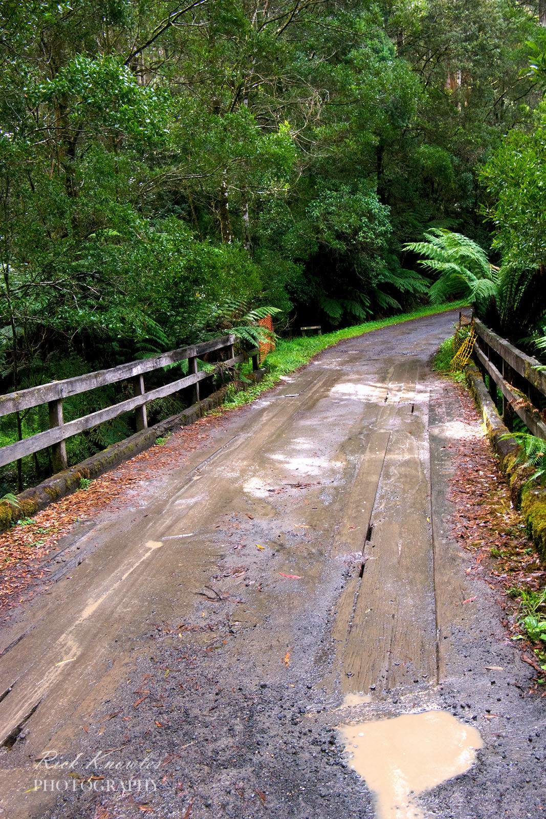 Rainforest Road, Otway National Park