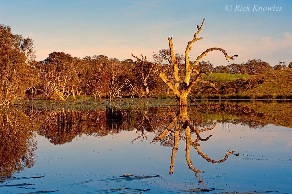 Mirror Image, Deans Marsh