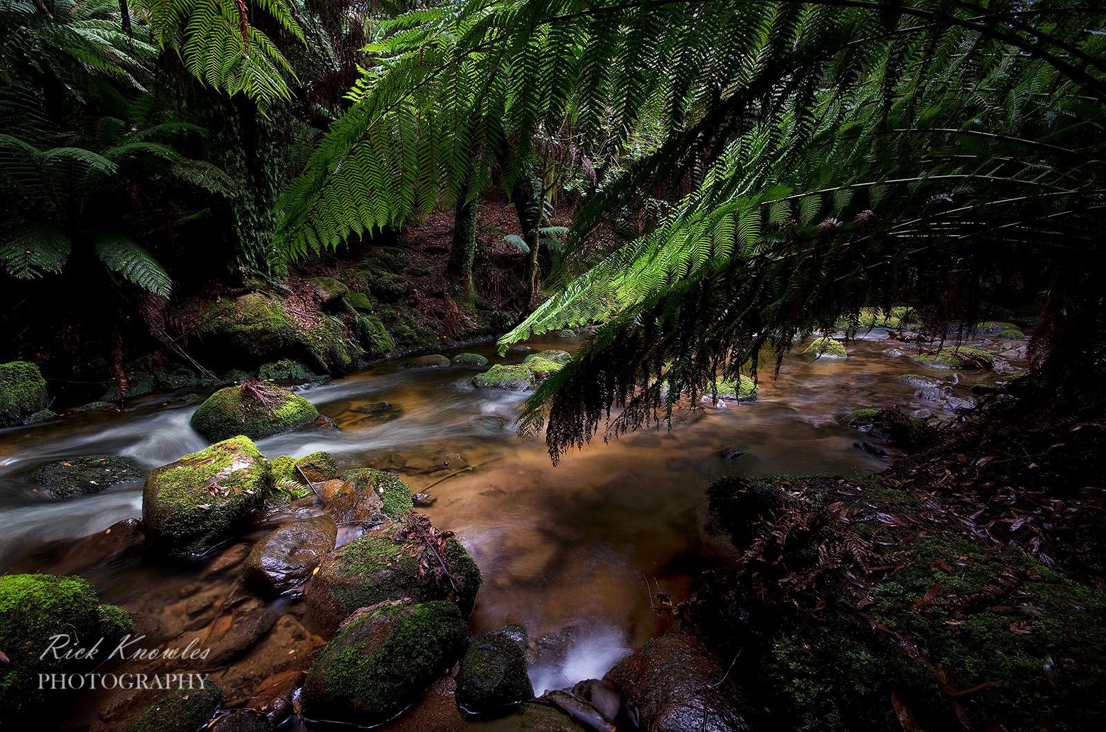 Rainforest, Tasmania