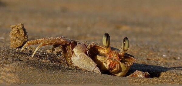 Crab-N-Brady-Sandy-5STAR