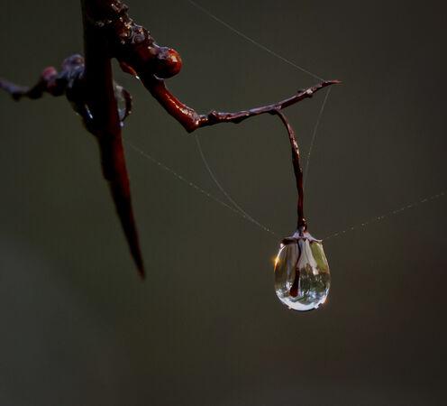 Forest lantern-N-de Voogt-Veronica-3STAR