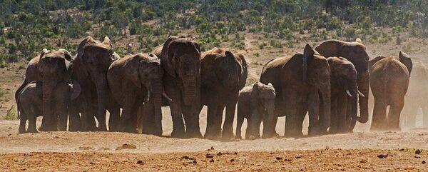 Gathering Herd