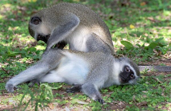 Monkey Therapy