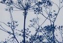 Stems. Cyanotype