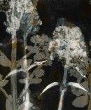 Layered plant imprints
