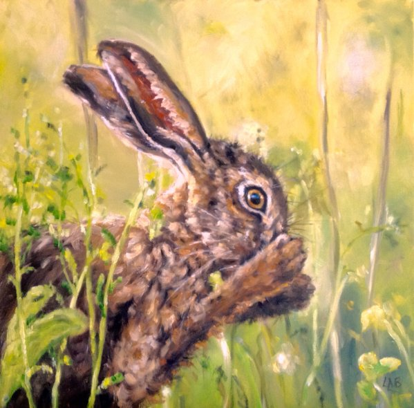 Nasal Hare