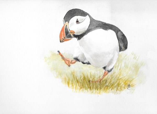 Huffin' Puffin - sold
