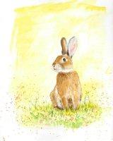 Sunny Rabbit