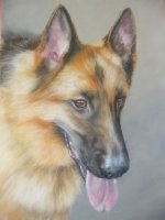 Alsatian Jun 14