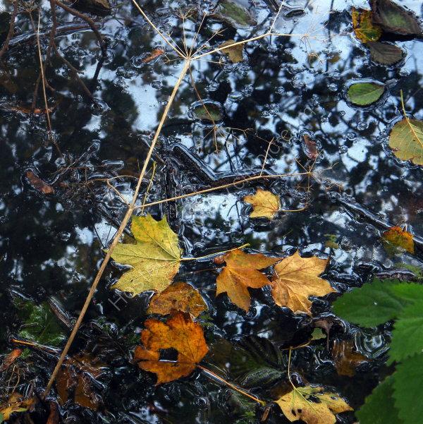 'Autumn Sky'