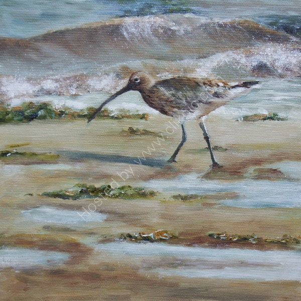 'Curlew'