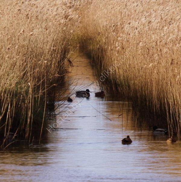 'Ducks & Drakes'