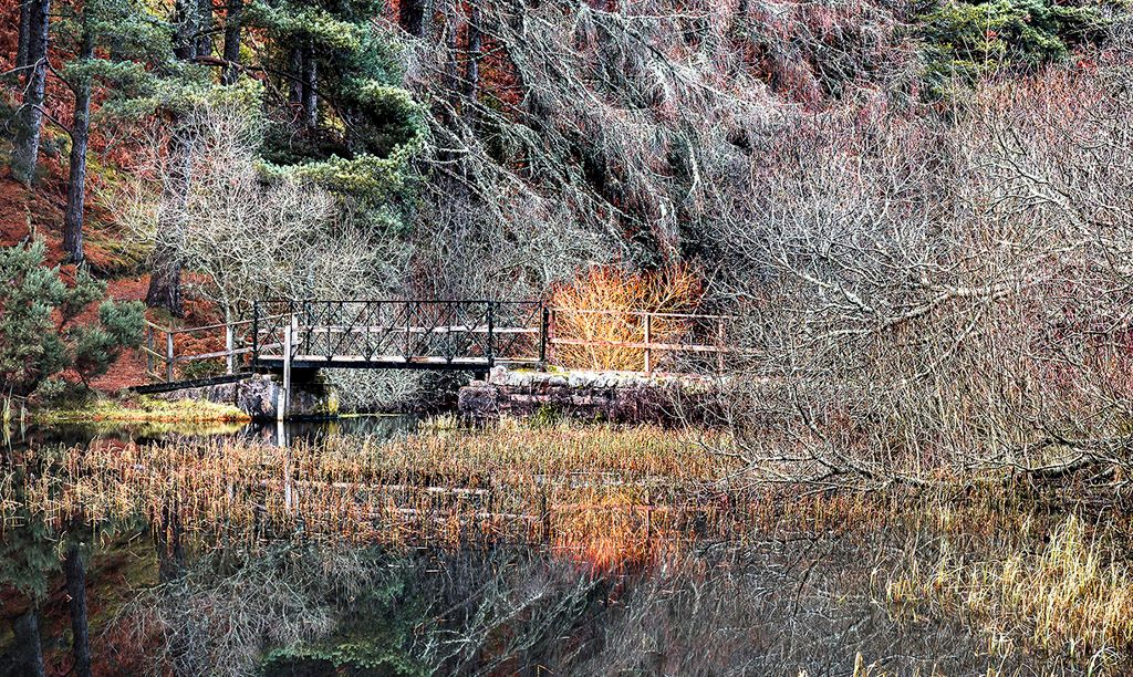 Forest Lochan