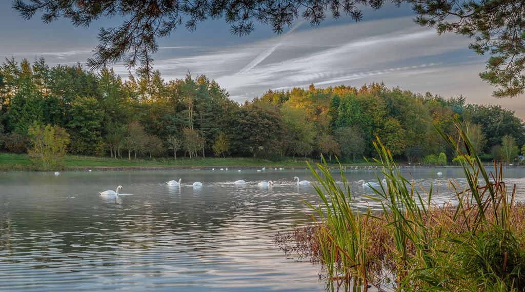 Morning at Loch