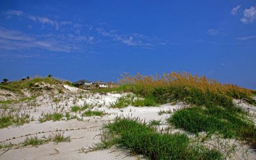 Sand dunes Tybee Island