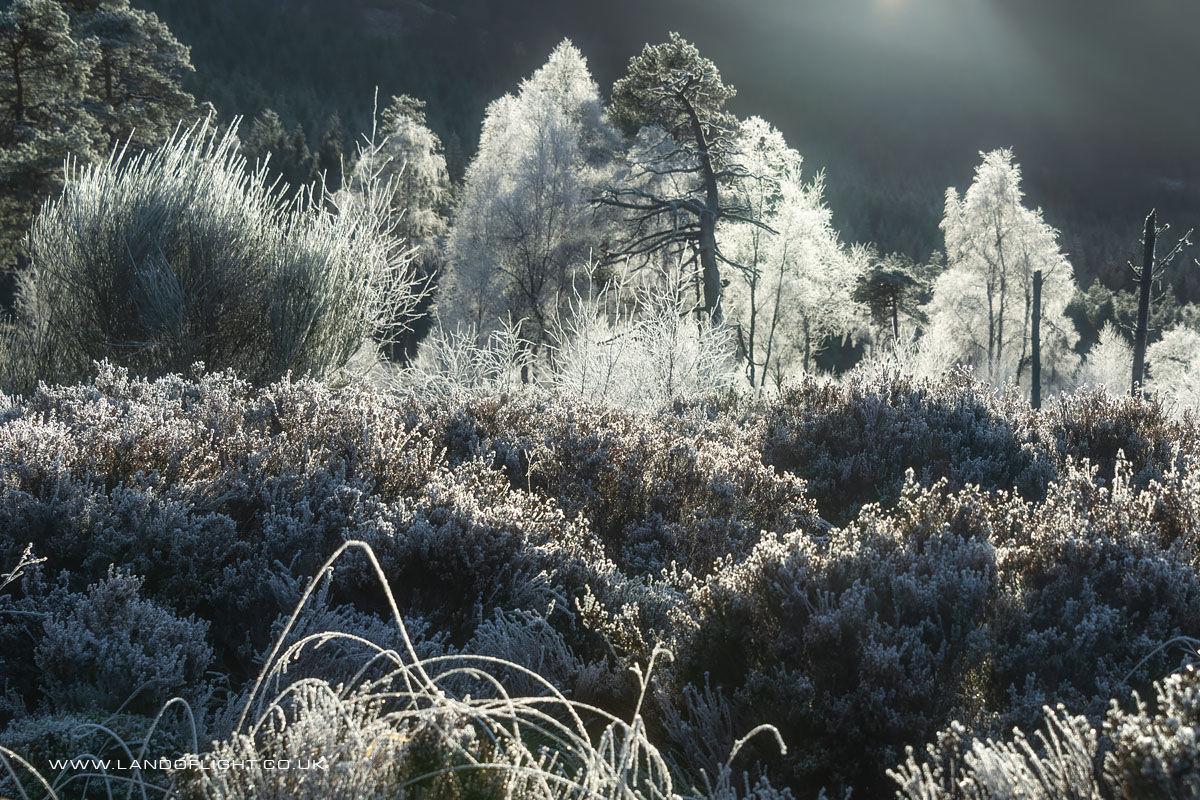 Frosty trees, Glen Moriston
