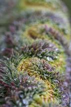 Euphorbia line