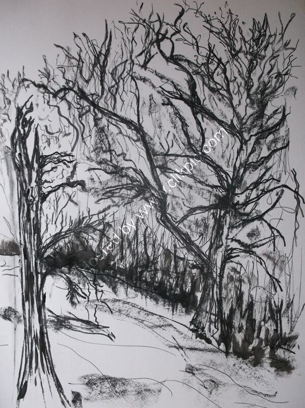 Charcoal study of trees (ancient landscape)