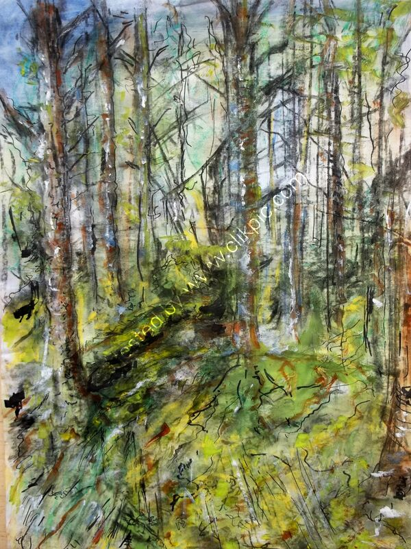 Study 1 Forest