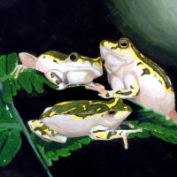PAINTED REED FROGS