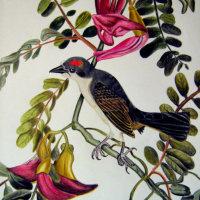RED HEADED BIRD (in homage to John J Audubon)
