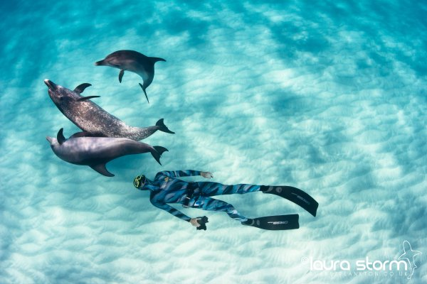 Dolphins & Freediver