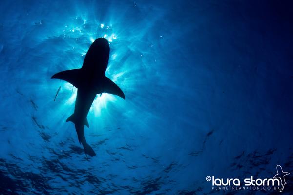 Shark on the Ceiling