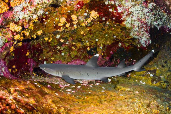 Shark's Garden