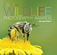 BWPA - Collection 6