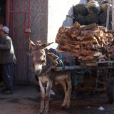 Mule Transport