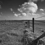 Downs Farmland