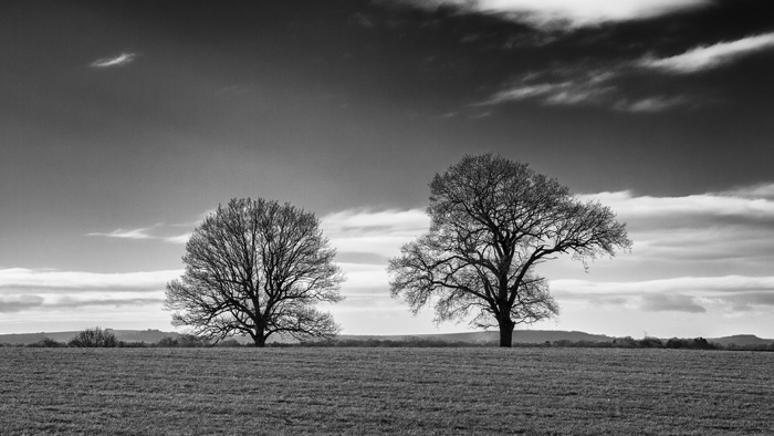 Two winter trees