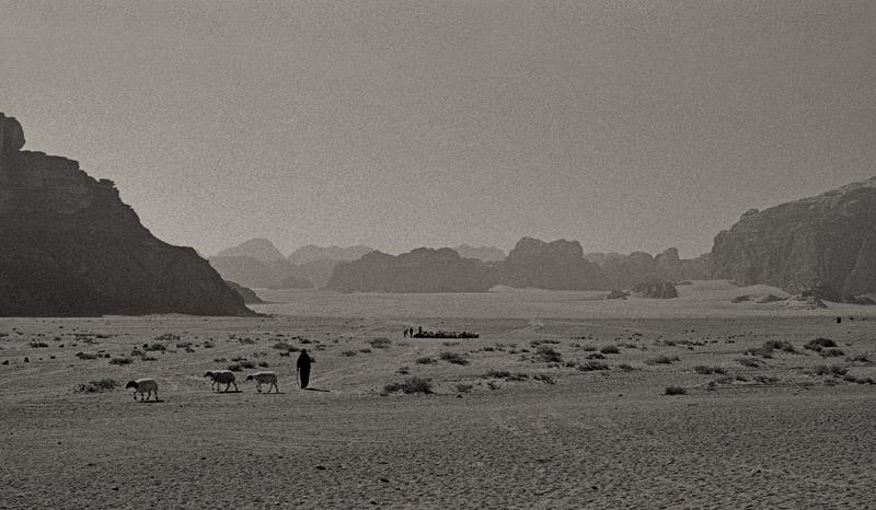 Wadi Rum shepherds