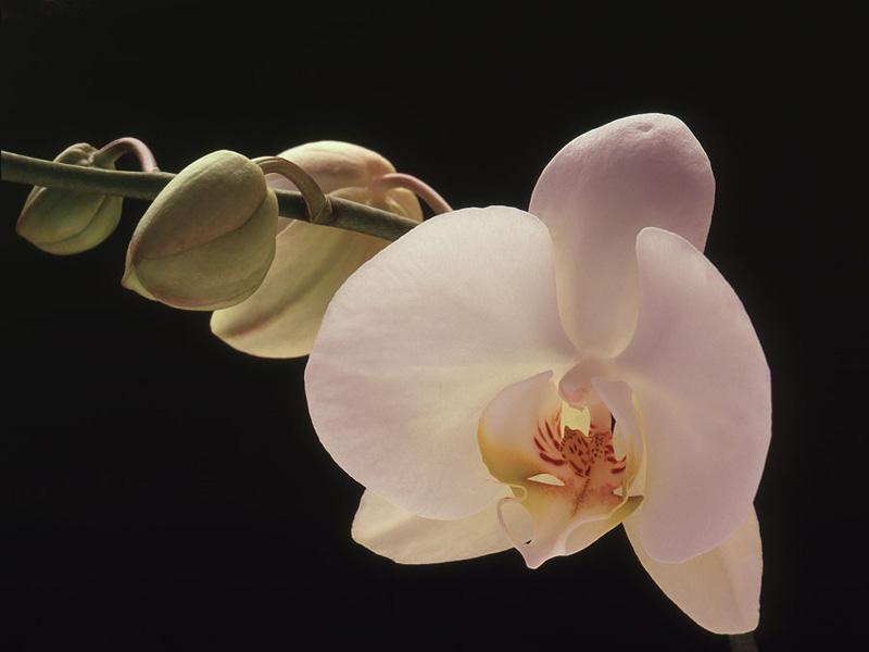 Orchids 14