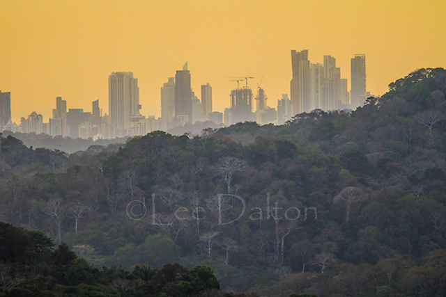 Rainforest and city at sunrise