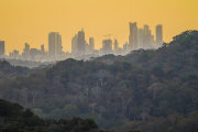Rainforest and city at sunrise
