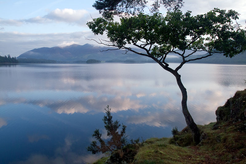 Derwentwater and Tree.