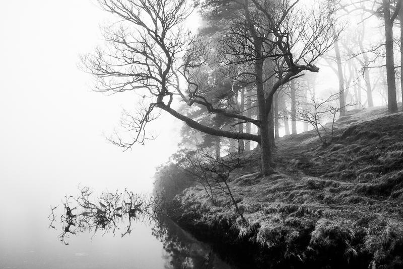 Lakeside Shapes, Derwentwater.