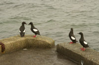 Corrie Birds on Arran