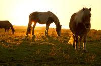 Strathaven Horses