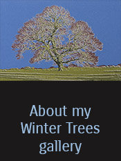 About Winter Trees link
