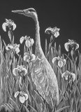 Heron and Irises - scaperboard