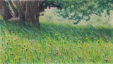 Picos meadow - coloured pencil