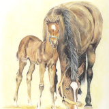 horse and foal - coloured pencil