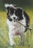 sheepdog - pastel
