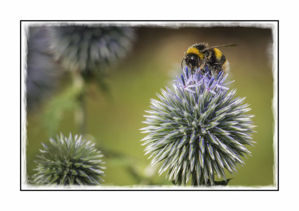 A Buzzy Day In The Garden