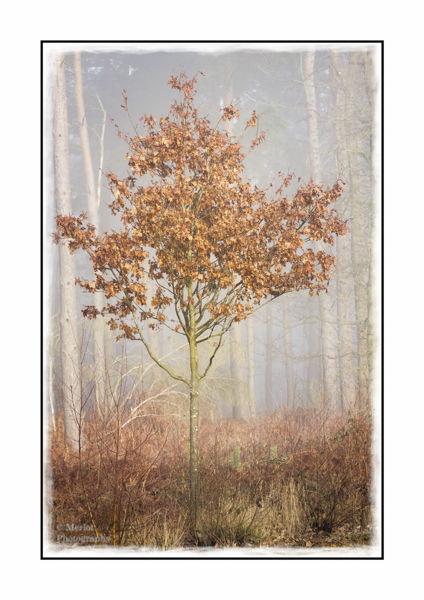 Mist-tree