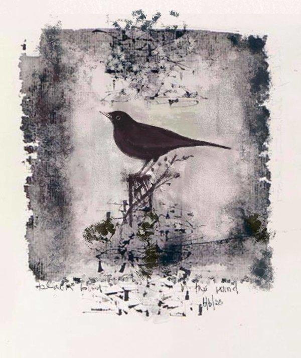 Blackbird in the Wind